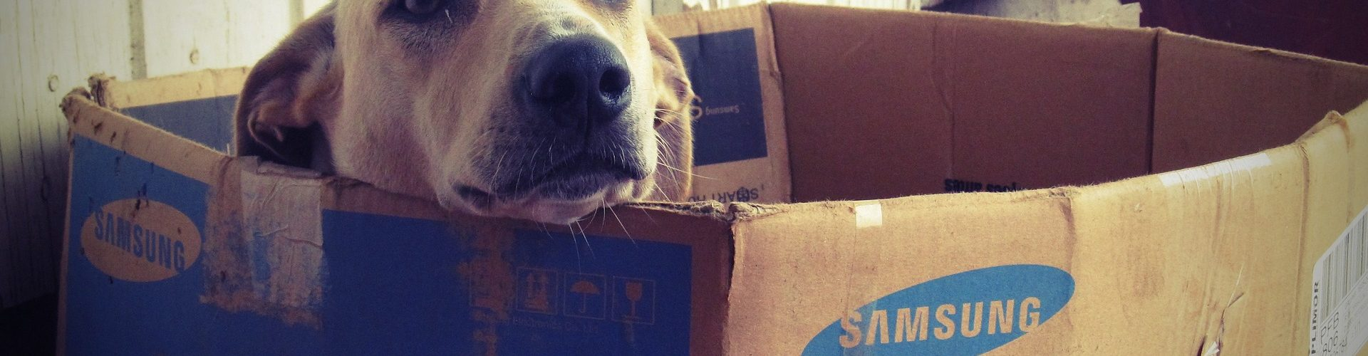 Moving with a Dog or Pet